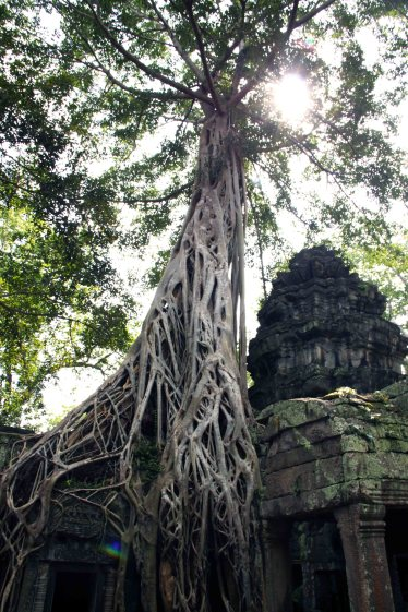 Mind-boggling. It is as if the tree stood watch over the temple.