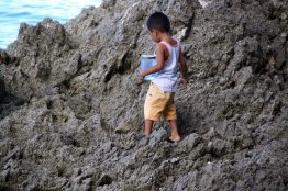 This little guy must be collecting baby crabs