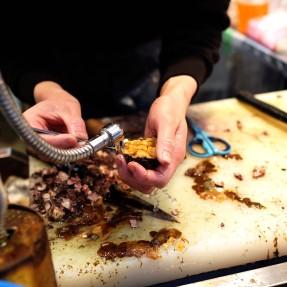 Sea urchin preparation.