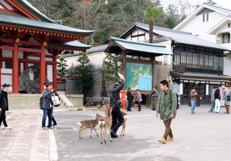 Miyajima_Floating Tori_Japan_Sharingourtravelstories_6588