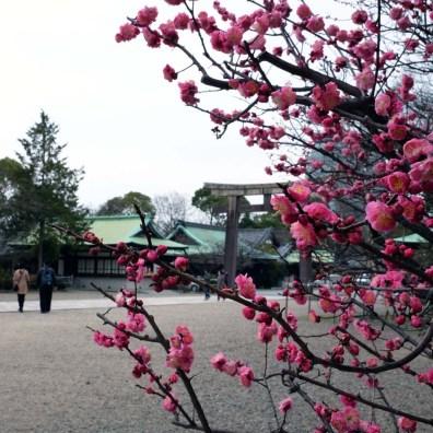 Sakura flowers always brighten things up, no matter where they are.